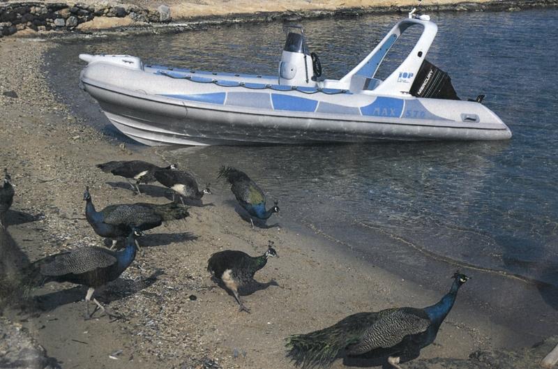 Αγορά Σκαφος MAX 570 Tourism