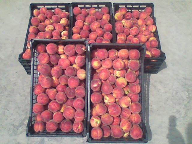 Αγορά Ροδάκινα, Δαμάσκηνα, Μήλα, Αχλάδια, Κεράσια, Νεκταρίνη