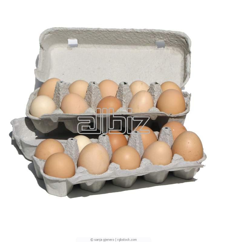 Αγορά Αυγά από αλανιάρες κότες ελευθέρας βοσκής