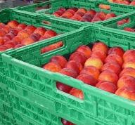 Αγορά Νεκταρίνια γλυκά από την περιοχή της Πέλλας