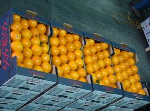 Αγορά Orange high quality