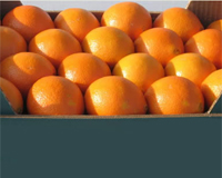 Αγορά High quality of oranges from Arta - Greece