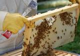 Αγορά Μελισσοκομικά βιολογικά προϊόντα
