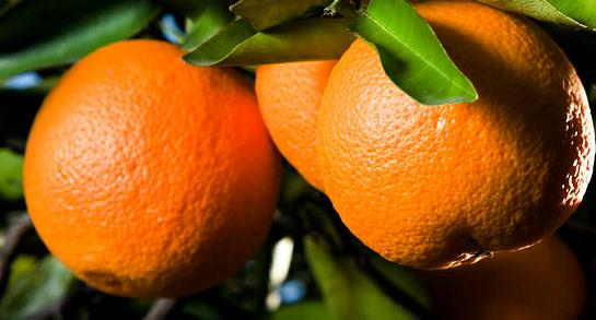 Αγορά Concentrated Orange Juice