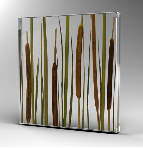 Bamboo Green 3D / Lake Plants 3D