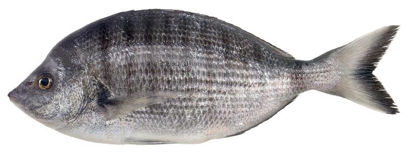 Αγορά Ψαρι Μυτάκι καλής ποιότητας