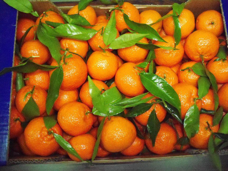 Αγορά Mandarin clementines from Greece
