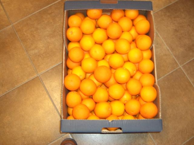 Αγορά Shamouti Oranges (Jaffa oranges), Valencia Oranges, Navel Oranges (Merlins), Navalines Oranges