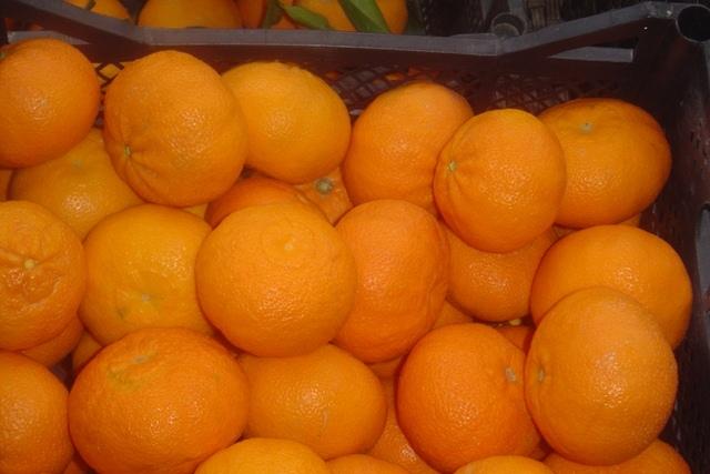 Αγορά Πορτοκαλια και φρέσκα φρούτα