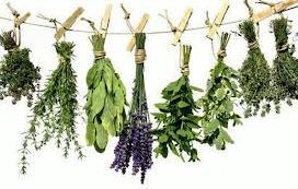 Αγορά Φασκόμηλο, το ιερό βότανο