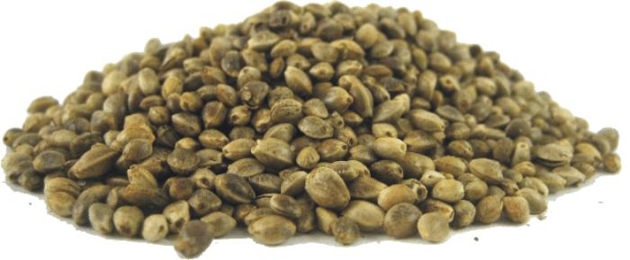 Αγορά Ηemp seeds 250gr