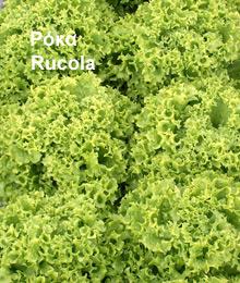 Αγορά Ρόκα, γαλλική σαλάτα πράσινη και σαλάτα κόκκινη