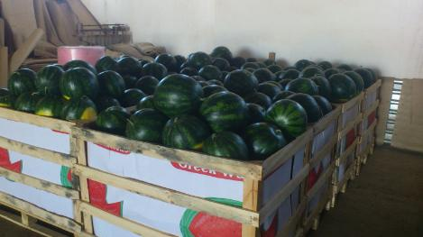 Αγορά Watermelon for export from Greece