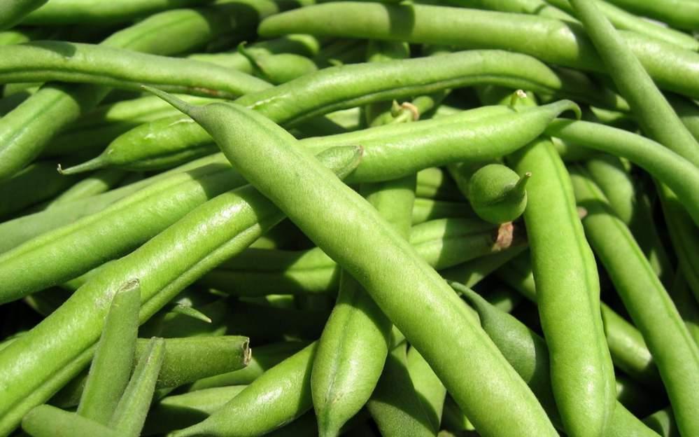 Αγορά Greek Beans (indoor-greenhouse production) up to 20tons