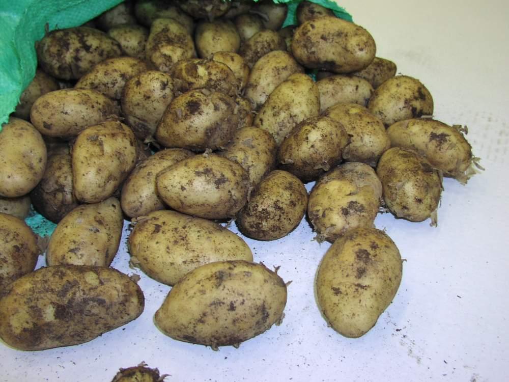 Αγορά Πατάτες Νευροκοπίου Potatoes