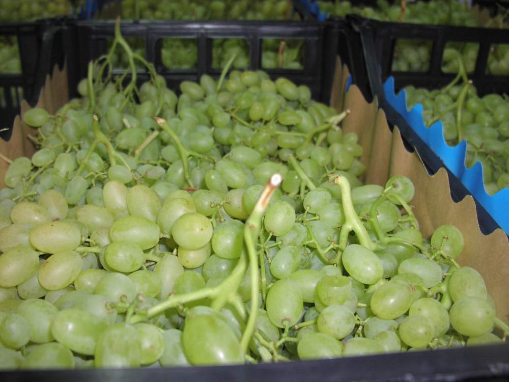 Αγορά Σταφύλια Grapes