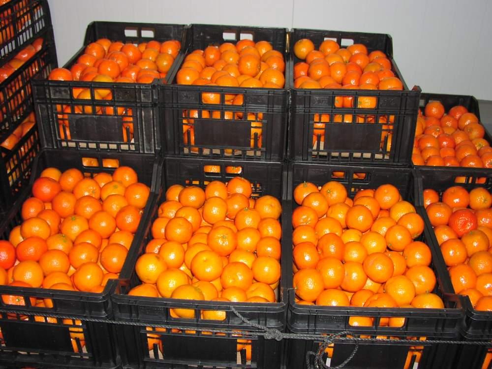 Αγορά Μανταρίνια Mandarines