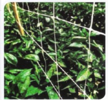 Αγορά Δίχτυα υποστήριξης για αναρριχητικά φυτά