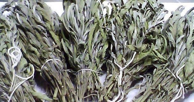 Αγορά Sage (salvia officinalis)