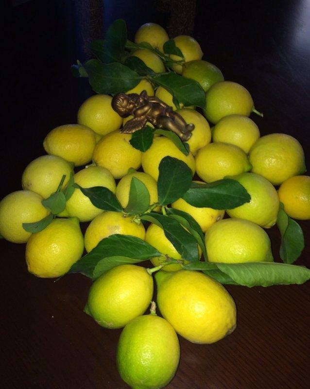 Greek super aroma lemons