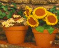 Αγορά Ceramic Pots