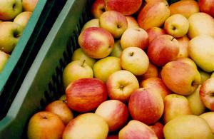 Mήλα άριστης ποιότητας