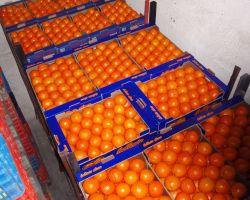 Αγορά Πορτοκάλια Navel από ελληνικό παραγωγό άριστης ποιότητας