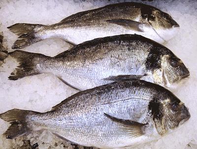 Αγορά Φαγγρί, Μυτάκι, Λυθρίνι καλής ποιότητας
