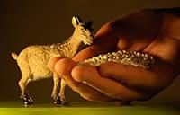 Αγορά Μίγματα ζωοτροφών για όλα τα είδη των ζώων και νυφαδοποιημένα δημητριακά εξαιρετικής ποιότητας