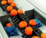 Γραμμές Διαλογής Ταξινόμησης Συσκευασίας Τομάτας