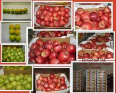 Greek red apples