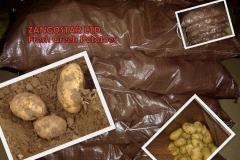 Greek potatoes spunta