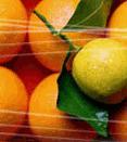 Ζουμερά πορτοκάλια από την Ελλάδα