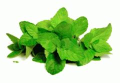 Δυόσμος (Mentha viridis)