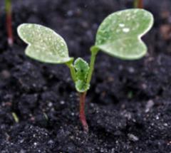 Λιπάσματα, φυτά και γλάστρες