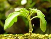 Φυτά εσωτερικού και εξωτερικού χώρου