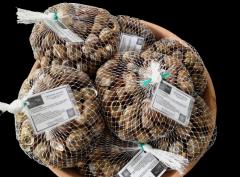 Φρέσκα σαλιγκαρια/live snails