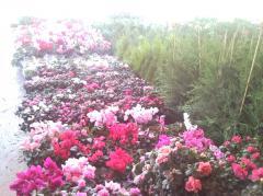 Φυτά εσωτερικού και εξωτερικού χώρου διάφορων