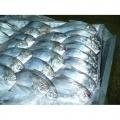 Ψάρια, σολομόσ κομμένος, ψάρια tilapia,