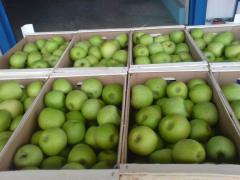 Πώληση των μήλων άριστης ποιότητας