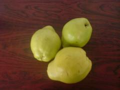 Pears from Greece for export
