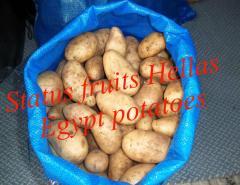 Potato Egypt high quality