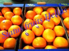 Greek Orange
