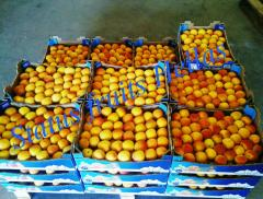 Apricots high quality