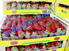 Greek strawberries for export