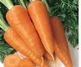 Καρότο από παραγωγό υψηλής ποιότητας