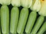 Σπόροι κολοκυθιού υψηλής ποιότητας