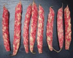 Σπόριο φασόλιων με άριστα ποιοτικά χαρακτηριστικά