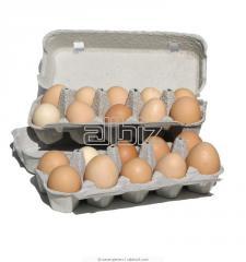 Αυγά από αλανιάρες κότες ελευθέρας βοσκής