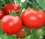 Ντομάτες ανώτερης ποιότητας